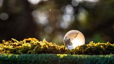 Crystal ball transparent in sunset on blurred abstract tropical forest scene. beautiful still life with glass ball. tropical forest landscape with glass sphere. copy space
