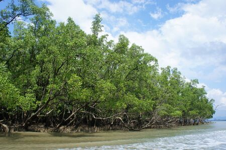 swampland: Mangrove in south of thailand, andaman Sea