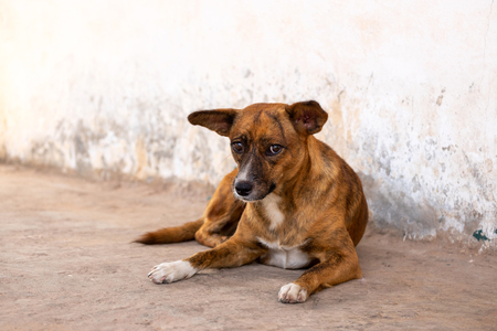 Poor and Unhappy Homeless Dog by the Local Urban Street.