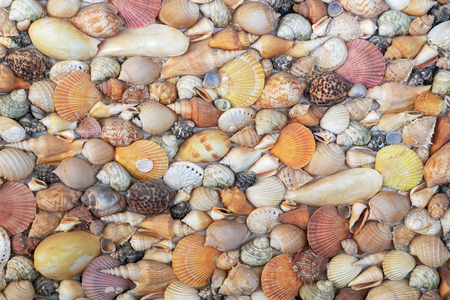 Various Sea Shells on a Concrete Wall Decoration Outdoor Park.