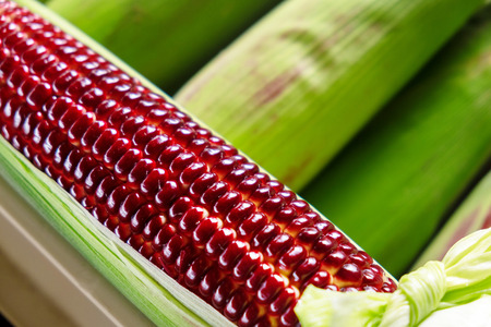 Red Ruby Corn, Thailand Healthy Organic Vegetable with Nature Sweet Taste.