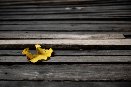 Dry Yellow Leaf on the Old and Grunge Wood Floor.