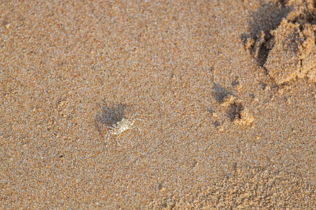 Small Ghost Crab Walking Quickly on the Sea Beach in the Morning. 写真素材