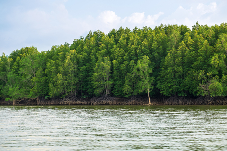 Mangroves Forrest by the Sea, Very Beautiful Green Mangrove island in Thailand.