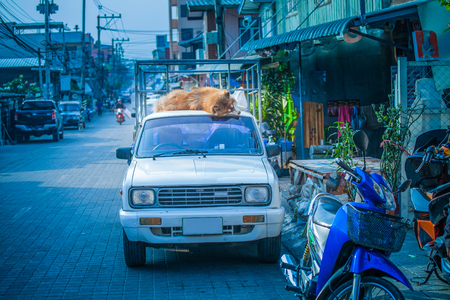a big dog sleep on the roof of white car beside the road 스톡 콘텐츠