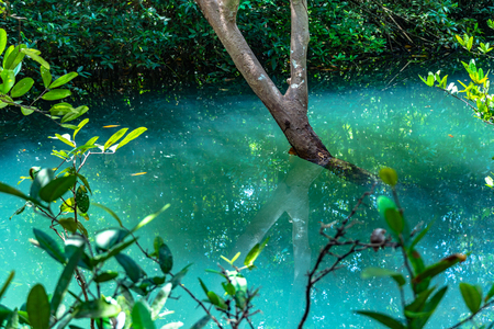 green water in green perfect swamp forest at Tha Pom Klong Song Nam amazing nature in Krabi Stok Fotoğraf