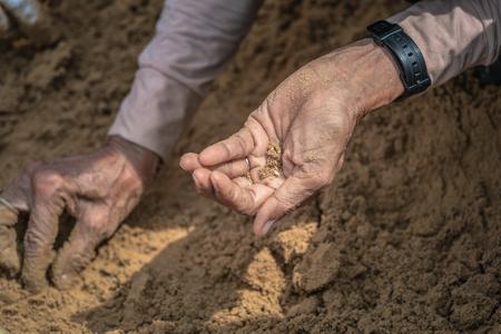 Les Thaïlandais et les agriculteurs recherchent des semences de riz lors de la journée de la cérémonie royale de labour afin d'être une bénédiction dans la riziculture Banque d'images