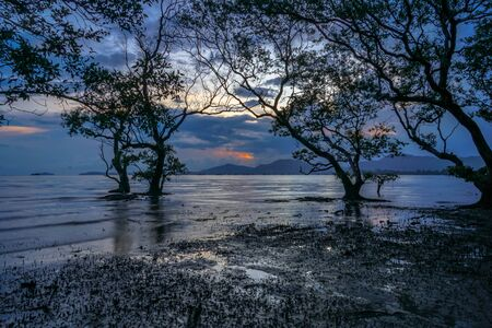 mangrove forest in twilight at Mudong canal in Phuket province Thailand.
