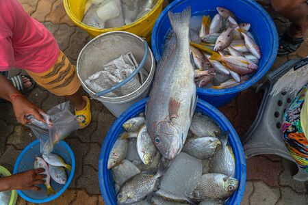 The way of life of fishermen fishing boats to feed their families. many people are waiting for buy direct fishes from the boat. because it cheap price and fresh