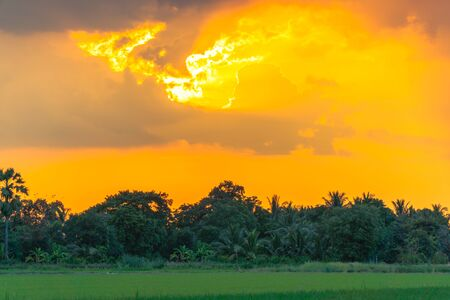 golden sky at sunset above the green rice field.