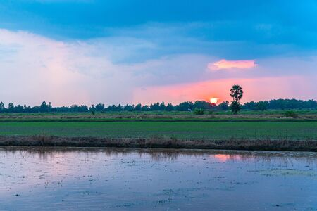sweet sunset over rice fields during planting season in the middle of Thailand