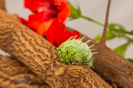 A large green worm crawls near the red flower.