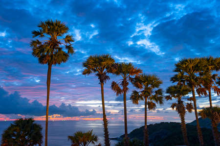 The sugar palm is a symbol of Promthep cape viewpoint. 