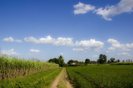 hitching post: Acres of corn.