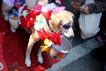 I fancy dog begging beside the road