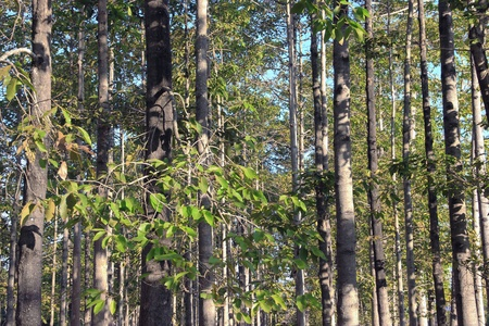 Trees of the forest on the mountain.
