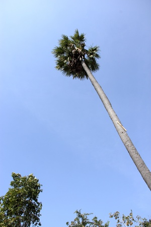 Towering palm Stock Photo