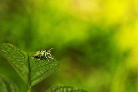 Beetles  photo