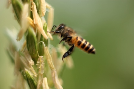 Swarm of bees to flowers