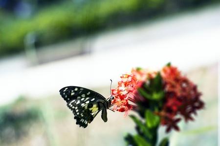 Little butterfly of the garden on a flower  macro shot Stock Photo - 13478363