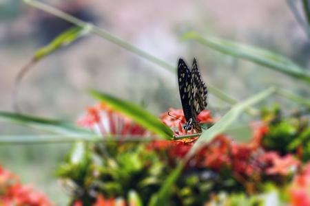 stamen wasp: Little butterfly of the garden on a flower  macro shot   Stock Photo