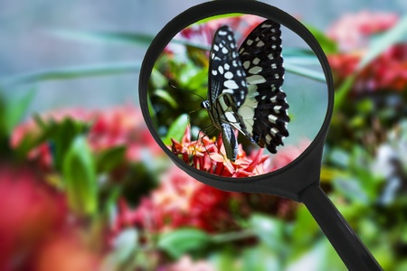 Little butterfly of the garden on a flower  macro shot Stock Photo - 13478317