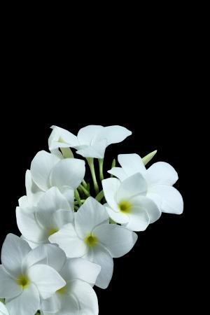 Macro of white flower on pebble