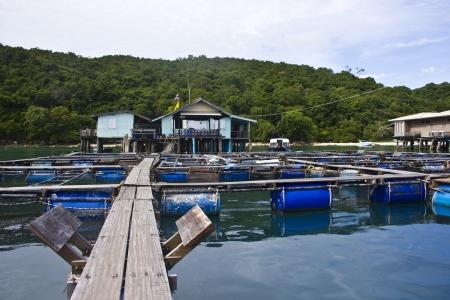 Fishermen fish in the sea