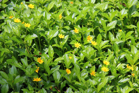 Breasted golden-yellow flowers