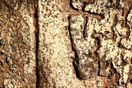 Texture of bark