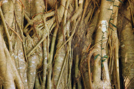 The beauty of roots