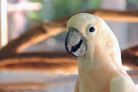 Macro close-up shot of white parrot. Stock Photo