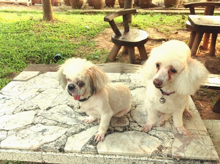 white dog: Two dogs sit down on table, at green garden.