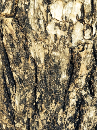 rough: Rough surface of bark tree in park.