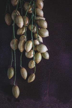 darkwood: Baccaurea ramiflora fruits on the old wood Stock Photo