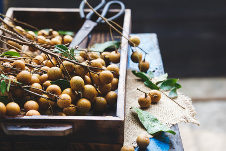 Fresh Longan Fruits from Viet Nam
