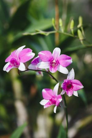 Purple Orchid Flowers Banco de Imagens