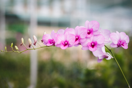 rung: Purple Orchid Flowers Stock Photo