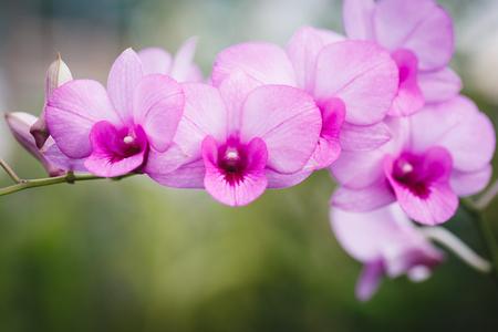 자주색 난초 꽃