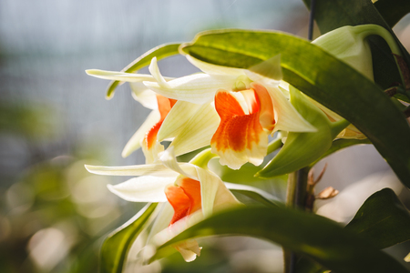 rung: White Orchid Flowers Stock Photo