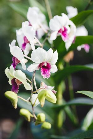 White Orchid Flowers Banco de Imagens