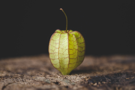 Ground Cherry