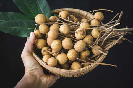 Fresh longan fruit- Sweet fruit 版權商用圖片 - 152115658