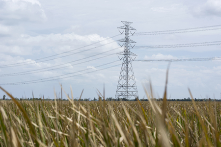lanscape: Dry grass lanscape with electricity post Stock Photo