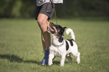 perfect heel work with a young boy and a small dog Standard-Bild