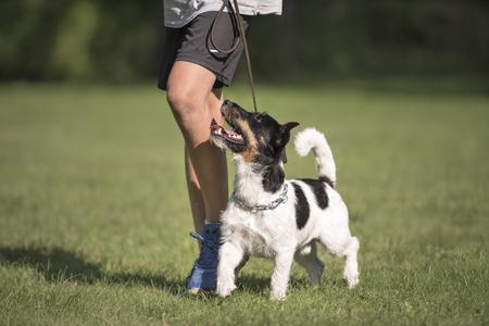 obediencia: talón trabajo perfecto con un niño y un perro pequeño Foto de archivo