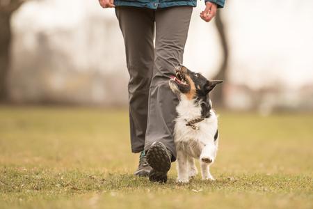 小さいと完璧なフットワーク ジャック ラッセル テリア犬