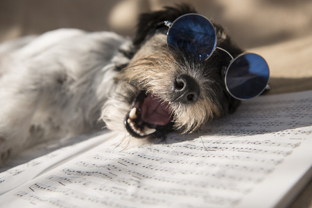 dog singing happy birthday - jack russell terrier Stock Photo