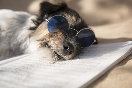 sleeping musician dog - jack russell terrier Stock Photo
