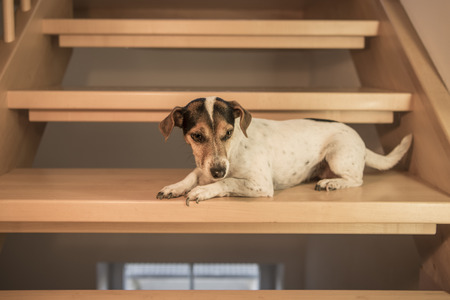 Dog is lying on stairs